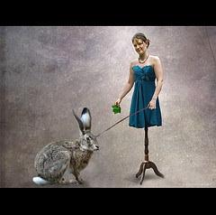 bunny control